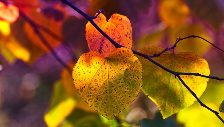 Main_autumn-leaves-3813741_1280